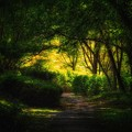 写真: 森の小径