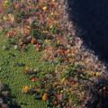 写真: 紅葉の宝箱
