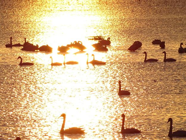 写真: 朝の光の中で・・・