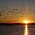 写真: 伊豆沼の朝