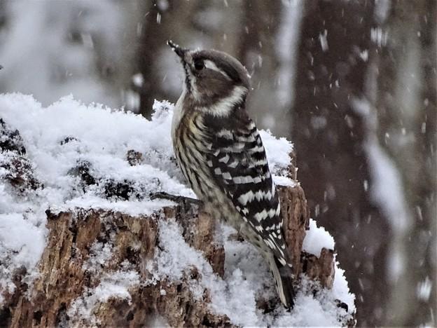 写真: 降りしきる雪が・・・