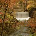 写真: 秋色鳴子峽
