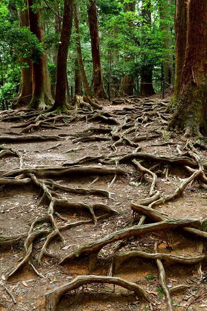2017_1001_132453 木の根道