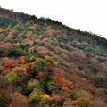 写真: 2017_1125_121923 色づく嵐山