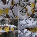 Photos: 雪の降った朝