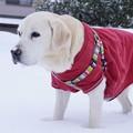 Photos: 雪散歩