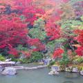 雨垂れ紅葉