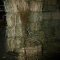 写真: 干し草