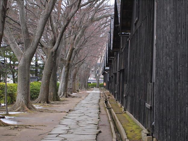 山居倉庫のけやき並木
