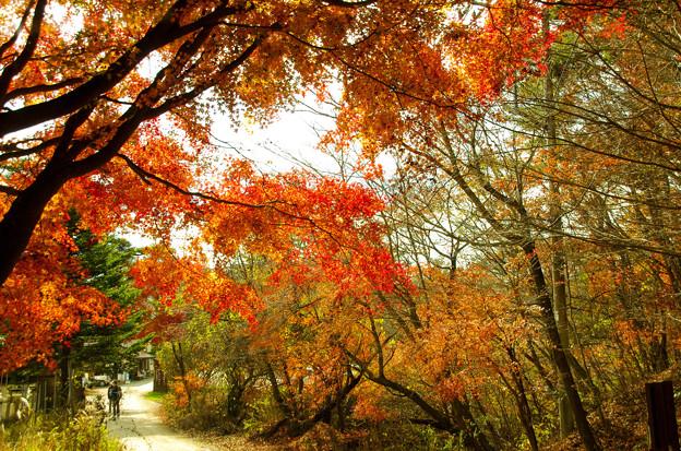 写真: 秋紅葉