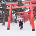 写真: 伏見稲荷神社