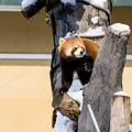Photos: 旭山動物園
