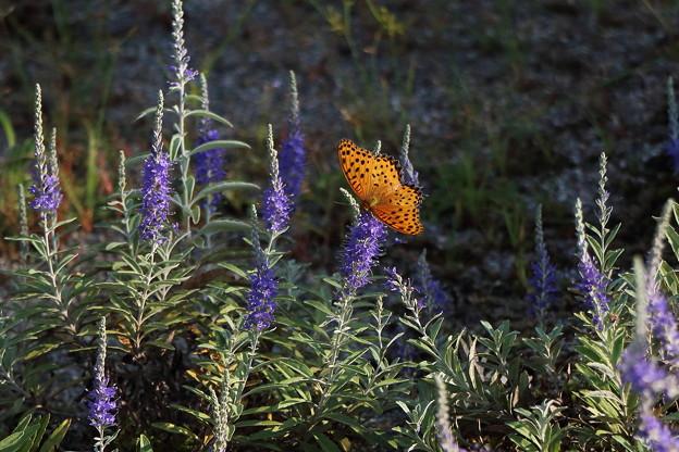 今日の1枚>花と蝶 IMG_4295