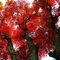 写真: 五百羅漢の紅葉 IMG_7974