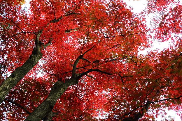 紅葉#3 IMG_7979