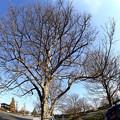 写真: 冬木立 IMG_9709