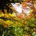 写真: P7081127ジオラマ
