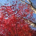 Photos: 今年の紅葉
