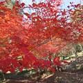 Photos: 遊歩道の紅葉