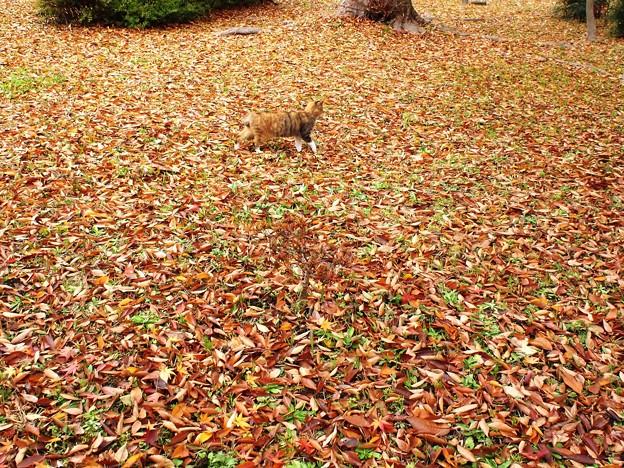 PB307973落ち葉と同化