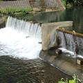写真: 清流の堰2