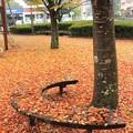 落ち葉のカーペット2