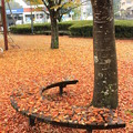 写真: 落ち葉のカーペット2