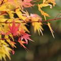 写真: 紅葉いろいろ2