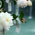 「原尻の滝」の秋3
