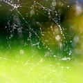 写真: 美しき糸