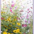 写真: 秋の花
