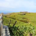 写真: 高架木道からの眺め