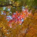 Photos: 赤い紅葉にズームイン!