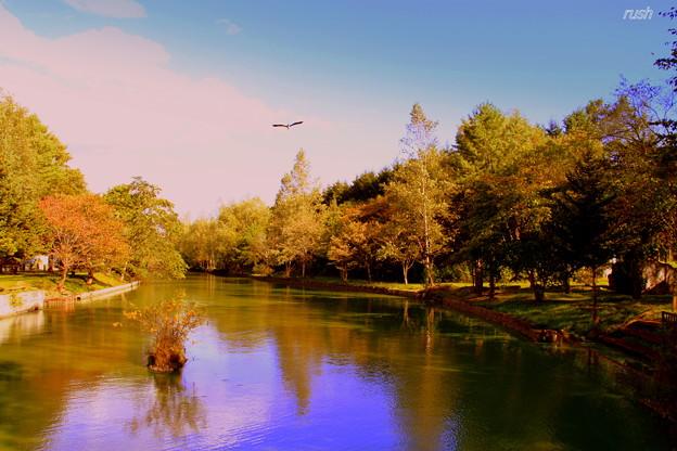青サギが飛ぶ池