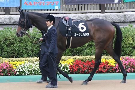 ルージュバック パドック(14/11/09・百日草特別)
