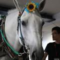 写真: ミルキー_1(17/08/14・BOAT RACE蒲郡)