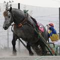 写真: キンツルモリウチ レース_2(17/07/30・5R)