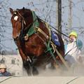 写真: ナカゼンガキタ レース(17/03/20・勝毎杯福寿草特別)