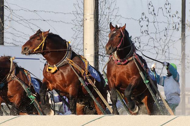 写真: メジロゴーリキ・センショウニシキ(17/03/20・北海道新聞社杯若草特別)