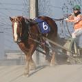 写真: ゴールドインパクト レース(17/03/20・北海道新聞社杯 若草特別)