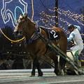 Photos: マルミゴウカイ レース_2(17/09/24・第25回 銀河賞)