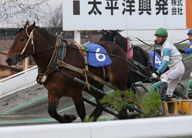 ハマノダイマオー  レース(17/09/24・第38回 青雲賞)