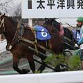 写真: ハマノダイマオー  レース(17/09/24・第38回 青雲賞)