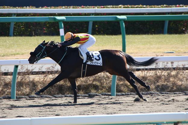 ブラックドーン レース(17/01/15・新馬戦)