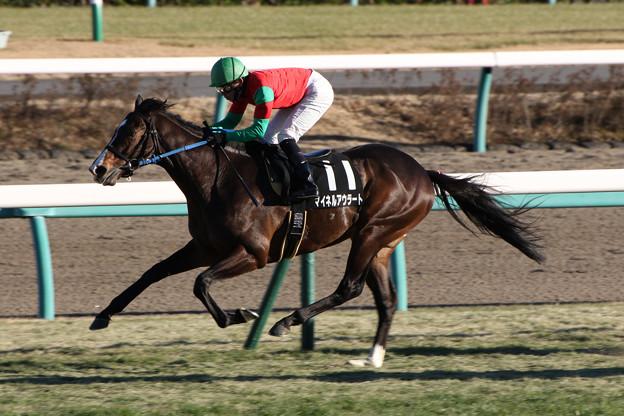 マイネルアウラート レース(17/01/15・ニューイヤーステークス)