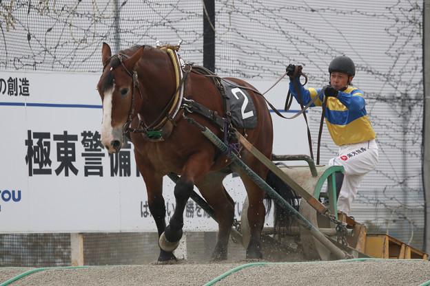 サカノナナヒメ レース(17/09/23・1R・帯広競馬場)