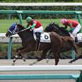 マイネルフェアネス レース(17/09/09・4R)