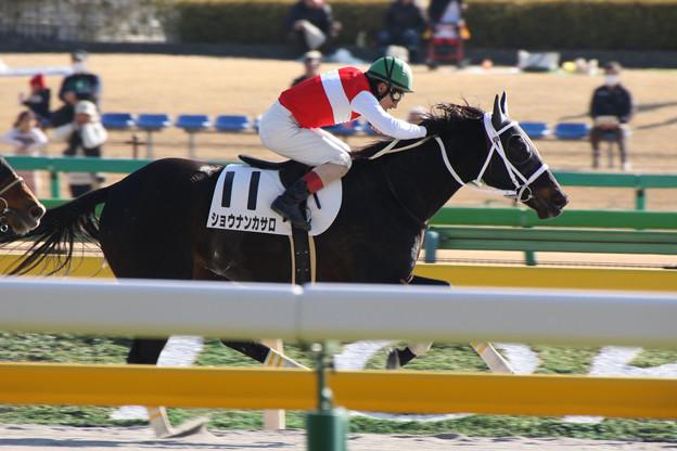 ショウナンカサロ  レース(17/01/28・8R)