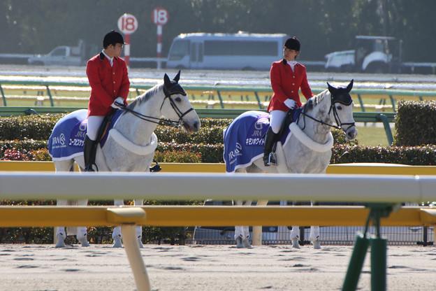 東京競馬場 誘導馬_1(17/01/28)
