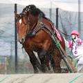 Photos: オレノロッキー レース(17/09/24・5R)